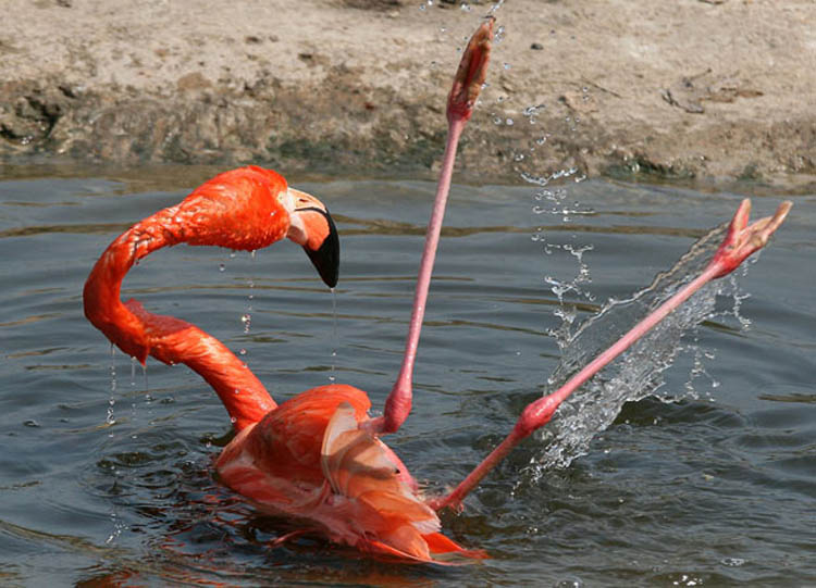 flamingo smart vibe 2