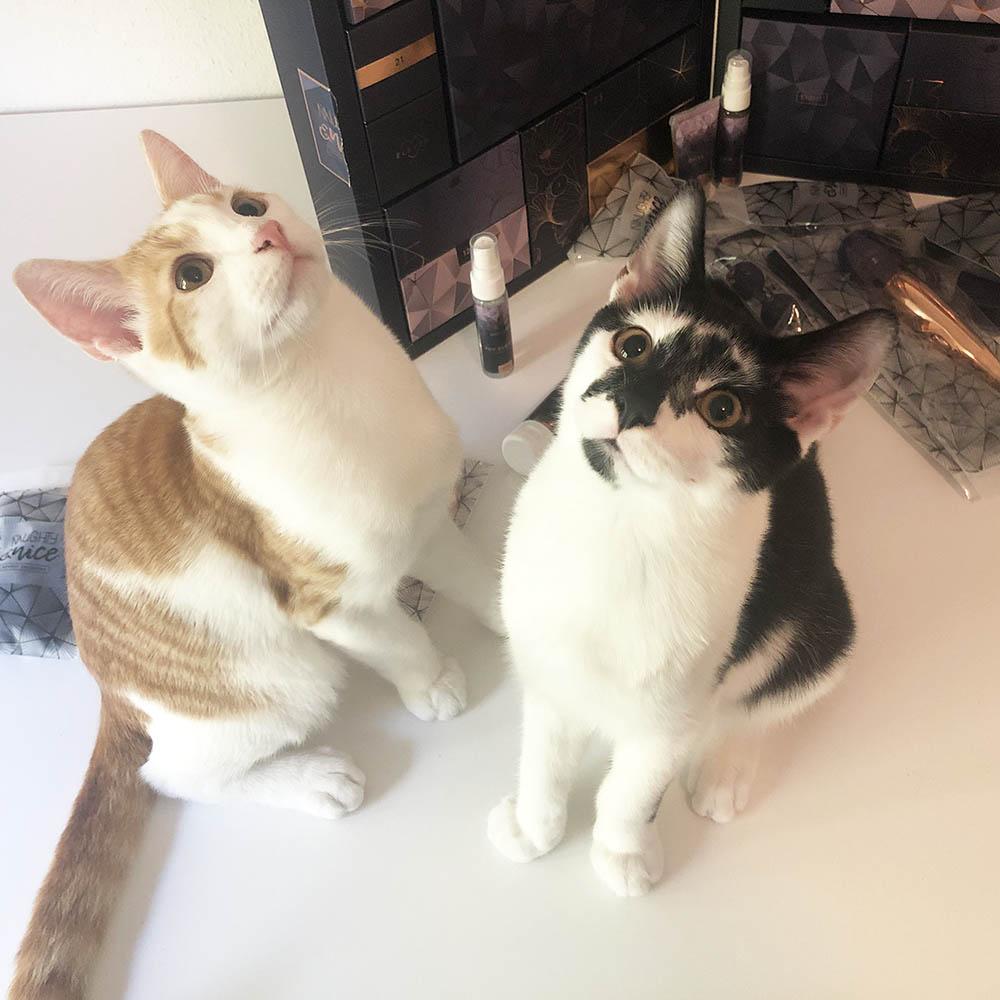 Dit is een afbeelding van kittens met de easytoys kalender