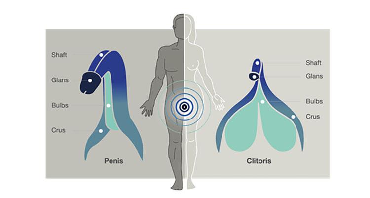Dit is een afbeelding van arcwave ion clitoris eikel